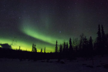 Aurora Borealis woodlands of Jokkmokk.