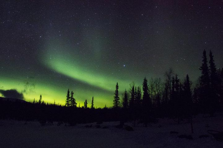 Aurora Borealis woodlands of Jokkmokk.