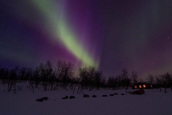 Powerful purple and green lights over the cabin in Sitojaure. On a dog sled tour with Jokkmokkguiderna.