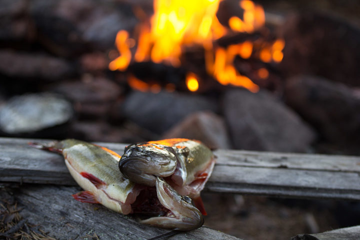 Fresh caught perch by fire on the tour Canoe adventure in the Pearl River Nature reserve.
