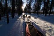 Draghundar som drar hundsläde i Jokkmokk.