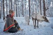 Sami culture and reindeer at the Arctic circle