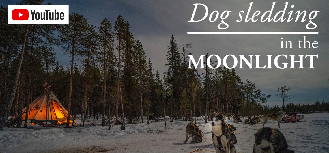 Dog sledding in the moonlight