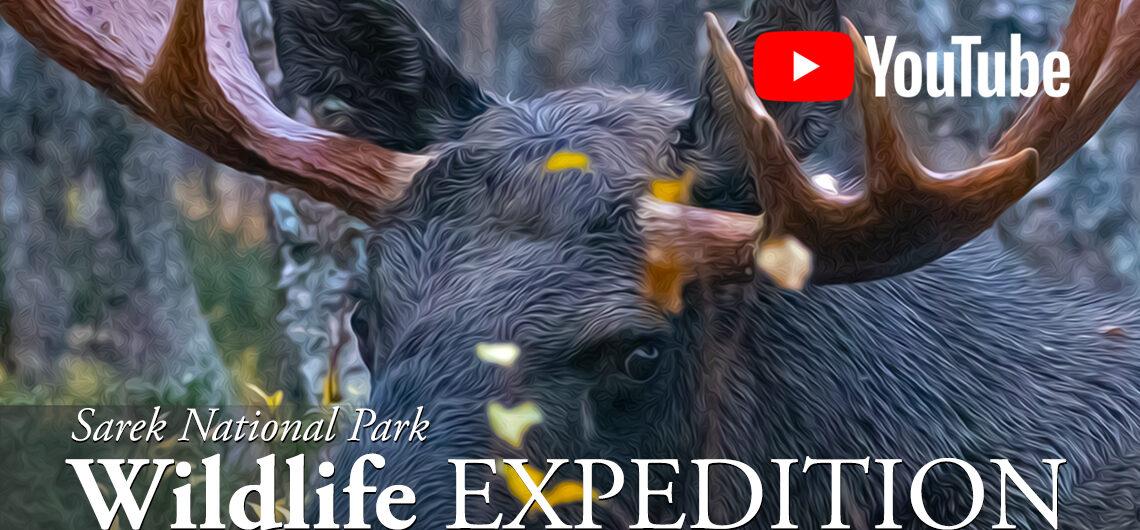 wildlife expedition movie