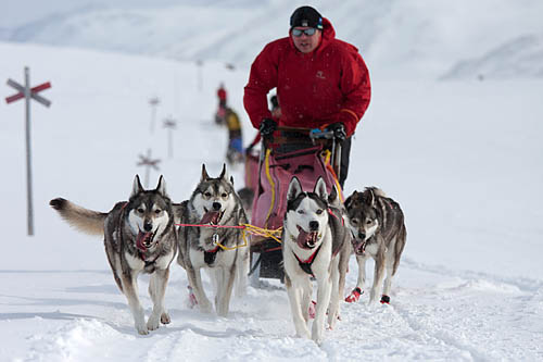 Dog teams in the Swedish mountains